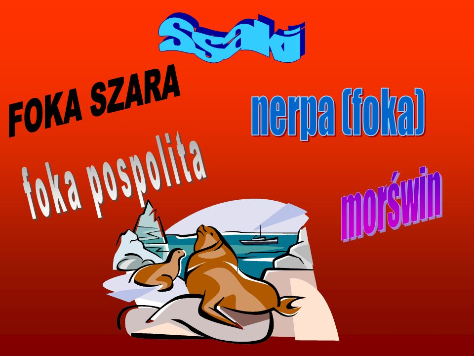 Ssaki FOKA SZARA nerpa (foka) foka pospolita morświn