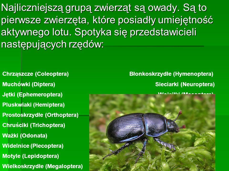 Najliczniejszą grupą zwierząt są owady