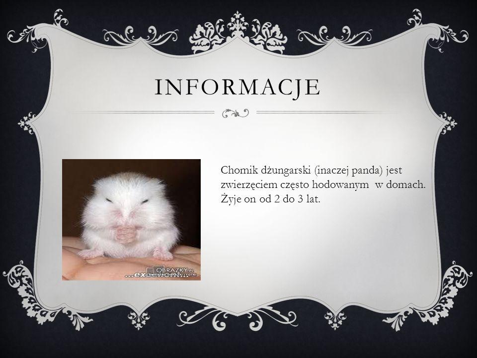 INFORMACJE Chomik dżungarski (inaczej panda) jest zwierzęciem często hodowanym w domach.