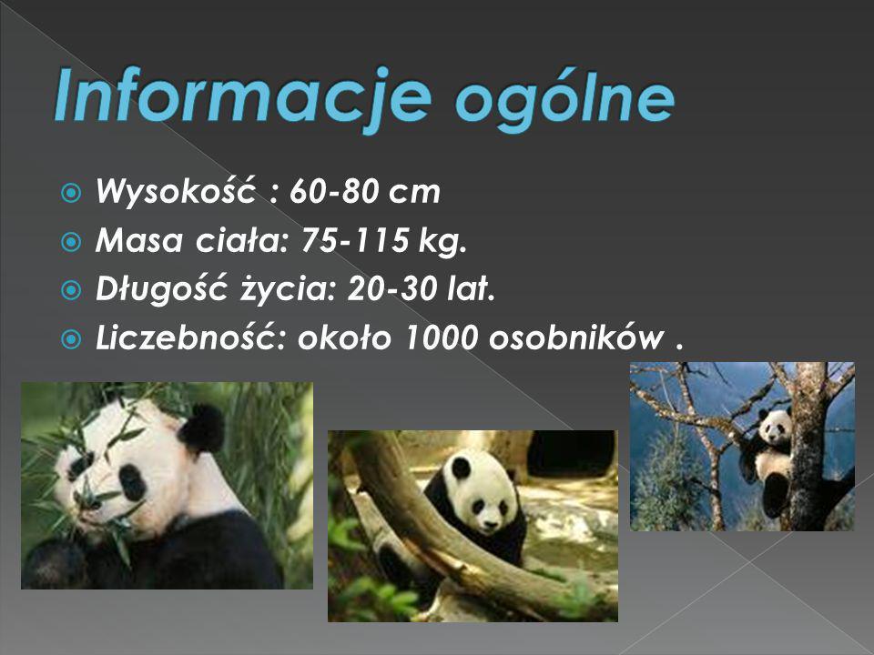 Informacje ogólne Wysokość : 60-80 cm Masa ciała: 75-115 kg.