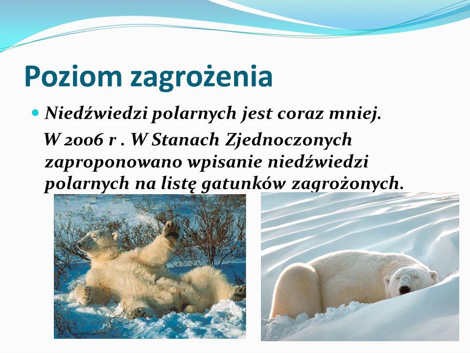 Poziom zagrożenia Niedźwiedzi polarnych jest coraz mniej.