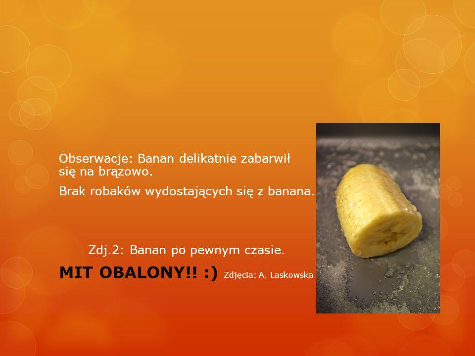 MIT OBALONY!! :) Zdjęcia: A. Laskowska