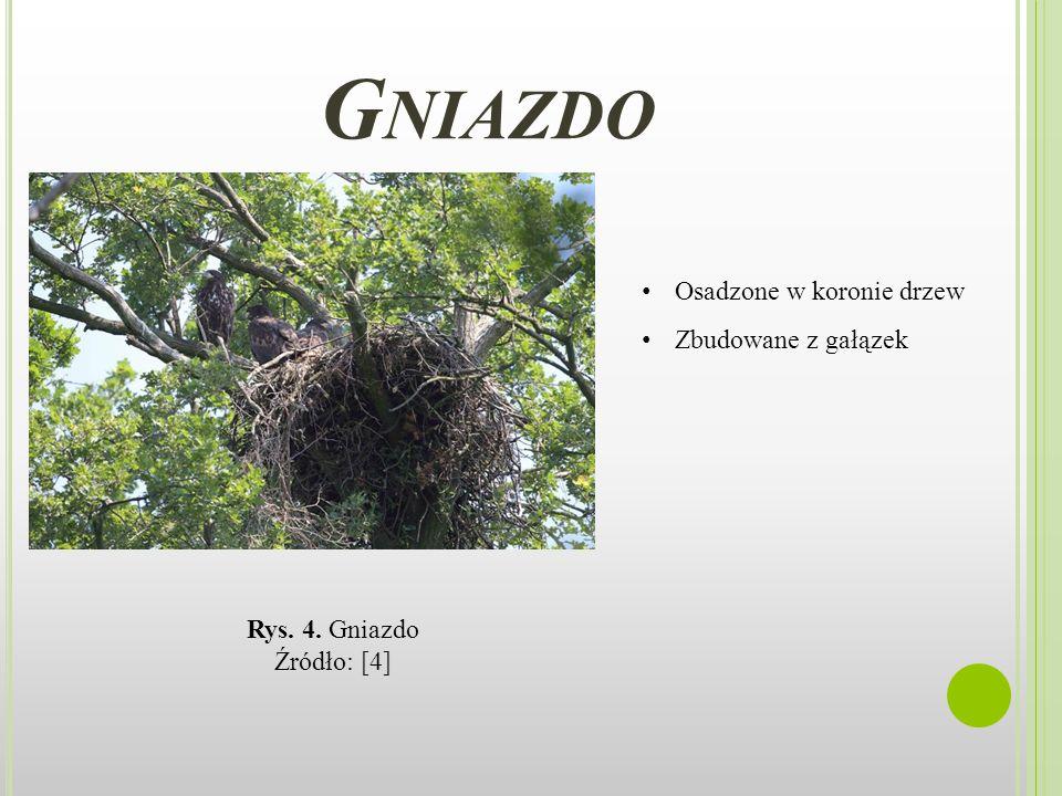 Gniazdo Osadzone w koronie drzew Zbudowane z gałązek Rys. 4. Gniazdo
