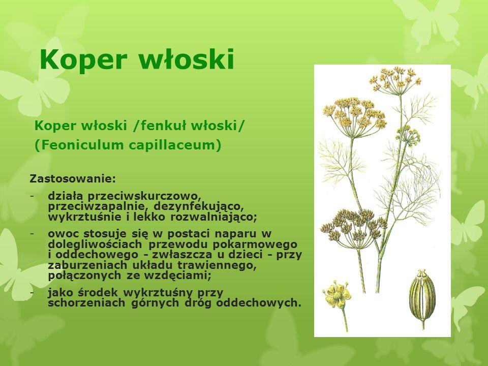 Koper włoski Koper włoski /fenkuł włoski/ (Feoniculum capillaceum)