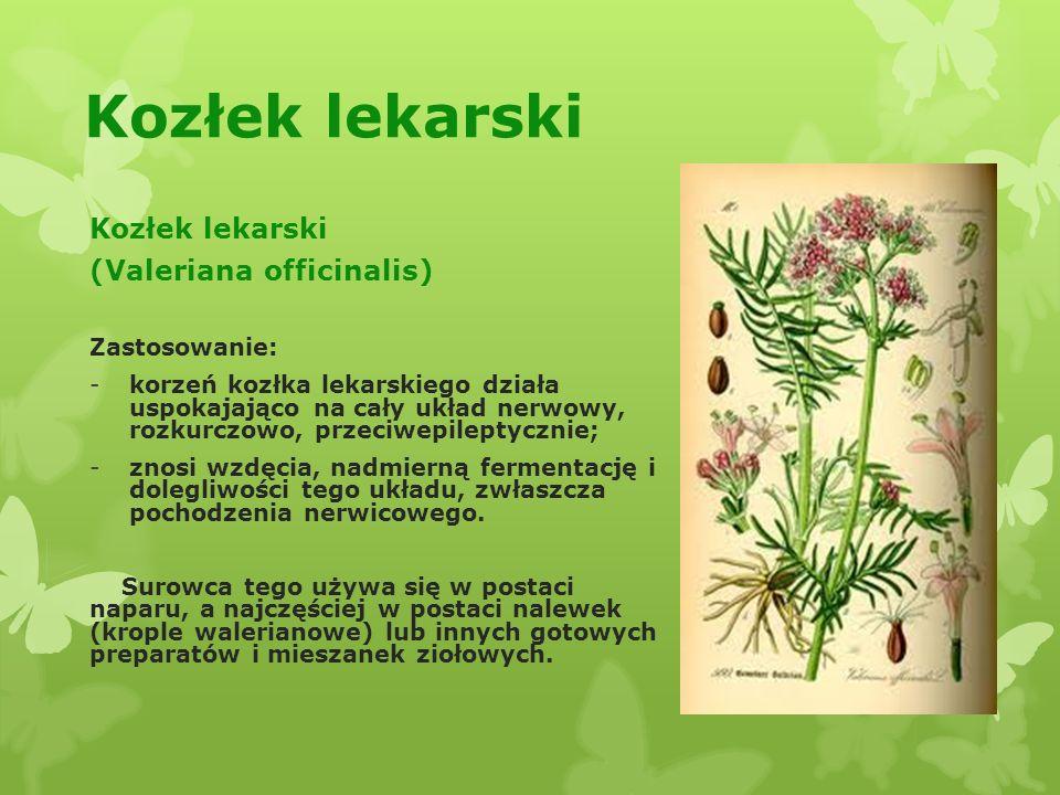 Rośliny Lecznicze I Ich Zastosowanie Ppt Pobierz