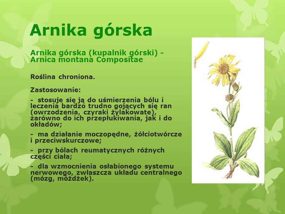 Arnika górska Arnika górska (kupalnik górski) - Arnica montana Compositae. Roślina chroniona. Zastosowanie: