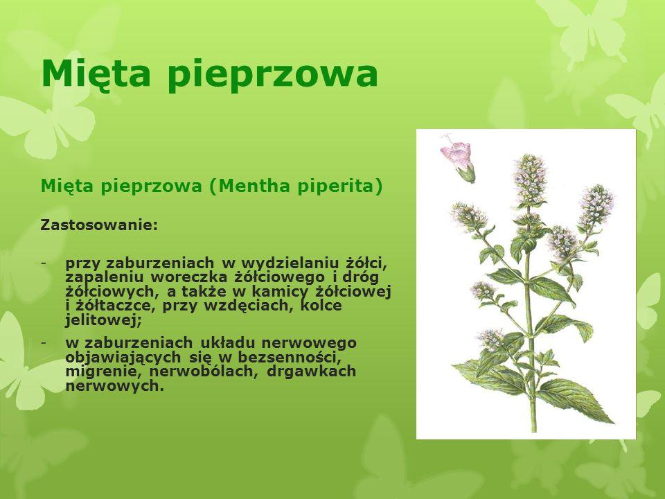 Mięta pieprzowa Mięta pieprzowa (Mentha piperita) Zastosowanie: