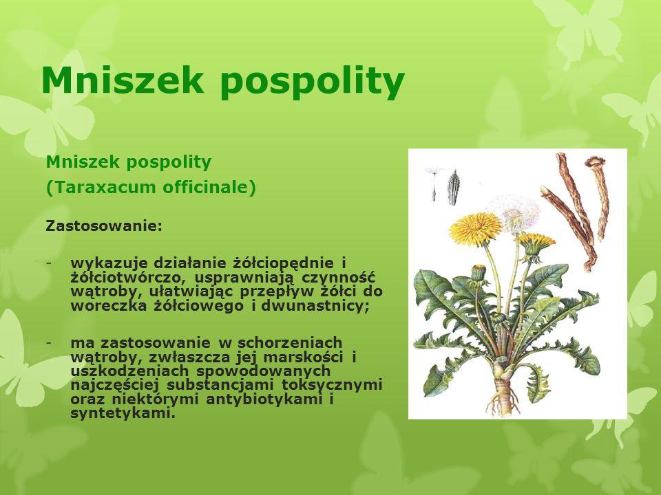 Mniszek pospolity Mniszek pospolity (Taraxacum officinale)