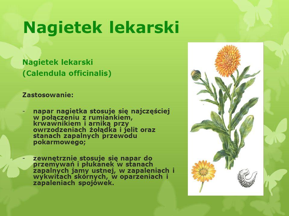 Nagietek lekarski Nagietek lekarski (Calendula officinalis)
