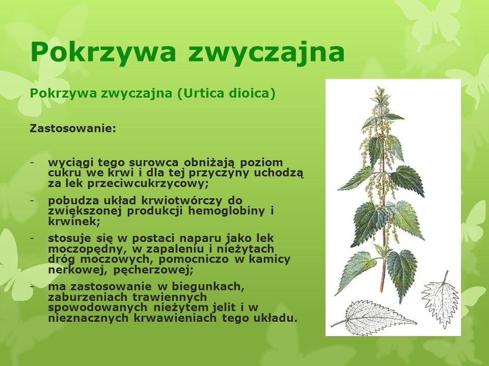 Pokrzywa zwyczajna Pokrzywa zwyczajna (Urtica dioica) Zastosowanie: