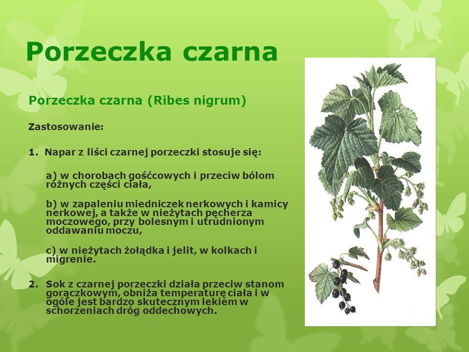 Porzeczka czarna Porzeczka czarna (Ribes nigrum) Zastosowanie: