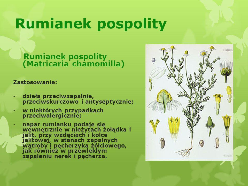 Rumianek pospolity Rumianek pospolity (Matricaria chamomilla)