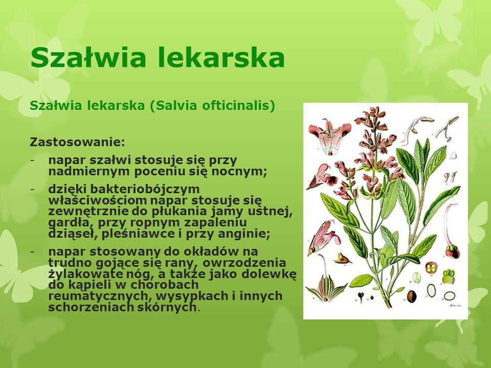 Szałwia lekarska Szałwia lekarska (Salvia ofticinalis) Zastosowanie: