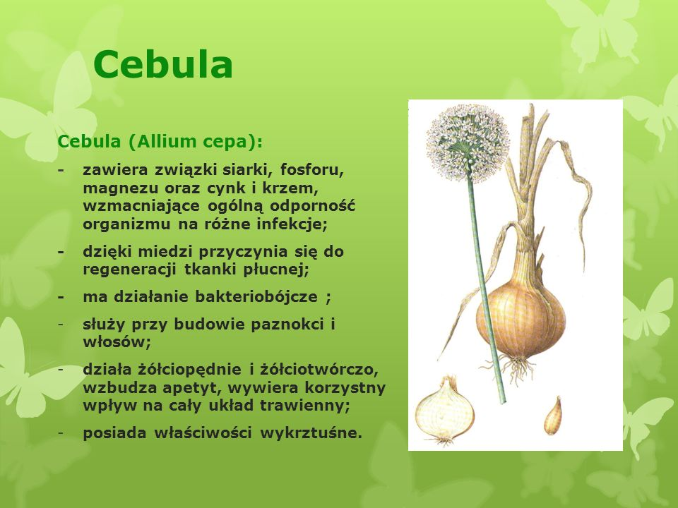 Cebula Cebula (Allium cepa):