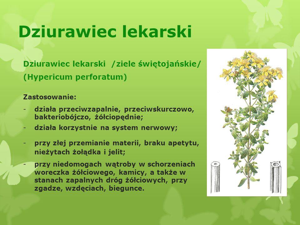 Dziurawiec lekarski Dziurawiec lekarski /ziele świętojańskie/