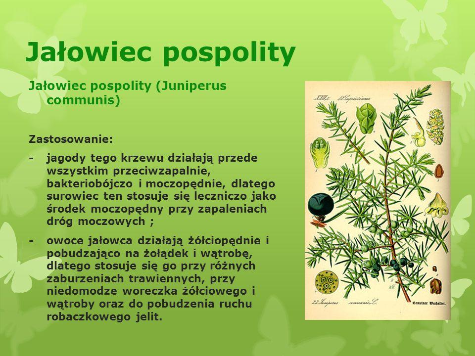 Jałowiec pospolity Jałowiec pospolity (Juniperus communis)