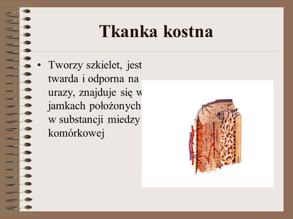 Tkanka kostna Tworzy szkielet, jest twarda i odporna na urazy, znajduje się w jamkach położonych w substancji miedzy komórkowej.