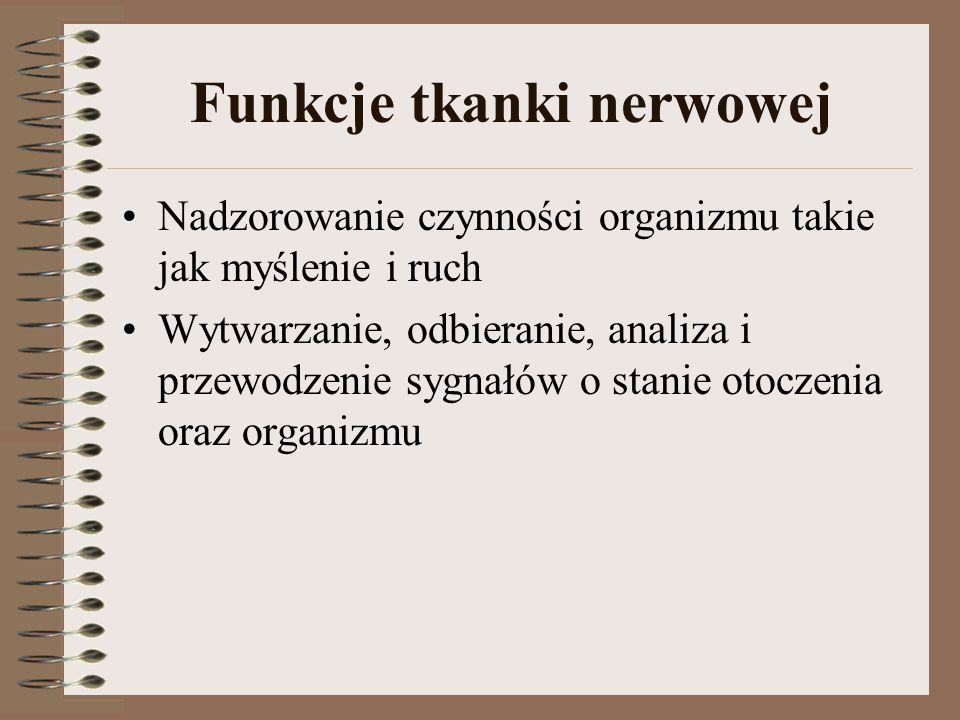 Funkcje tkanki nerwowej
