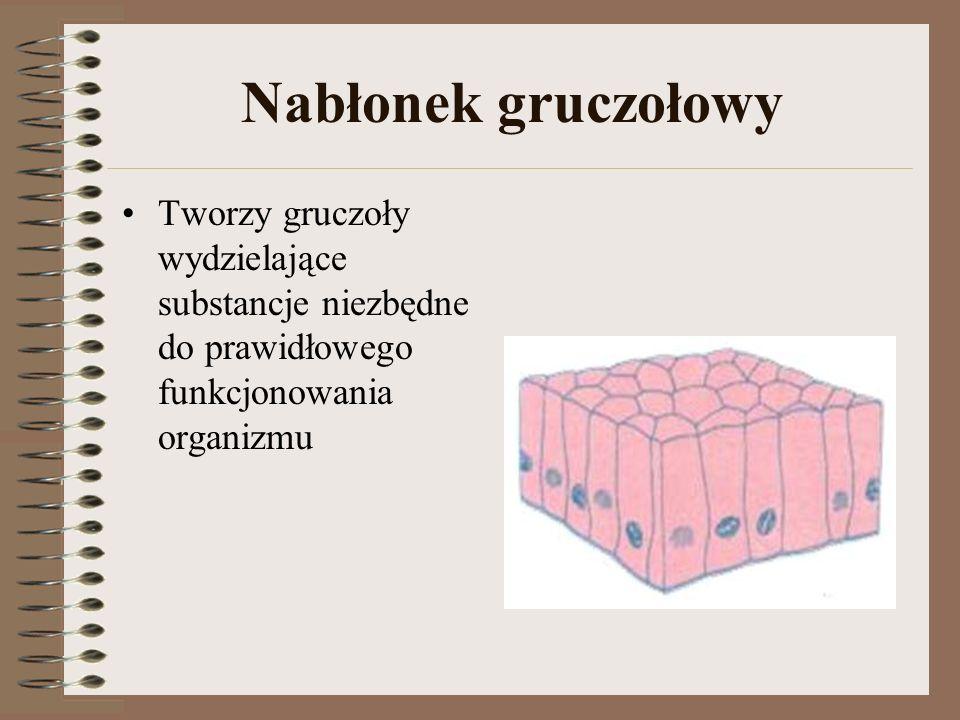 Nabłonek gruczołowy Tworzy gruczoły wydzielające substancje niezbędne do prawidłowego funkcjonowania organizmu.