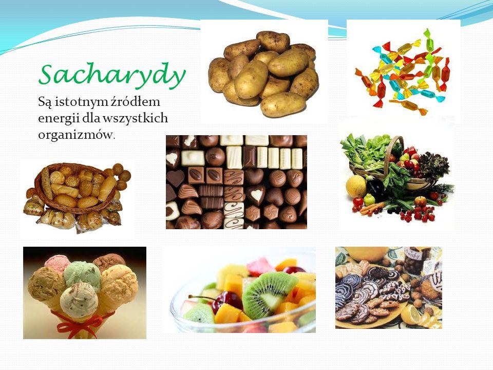 Sacharydy Są istotnym źródłem energii dla wszystkich organizmów.