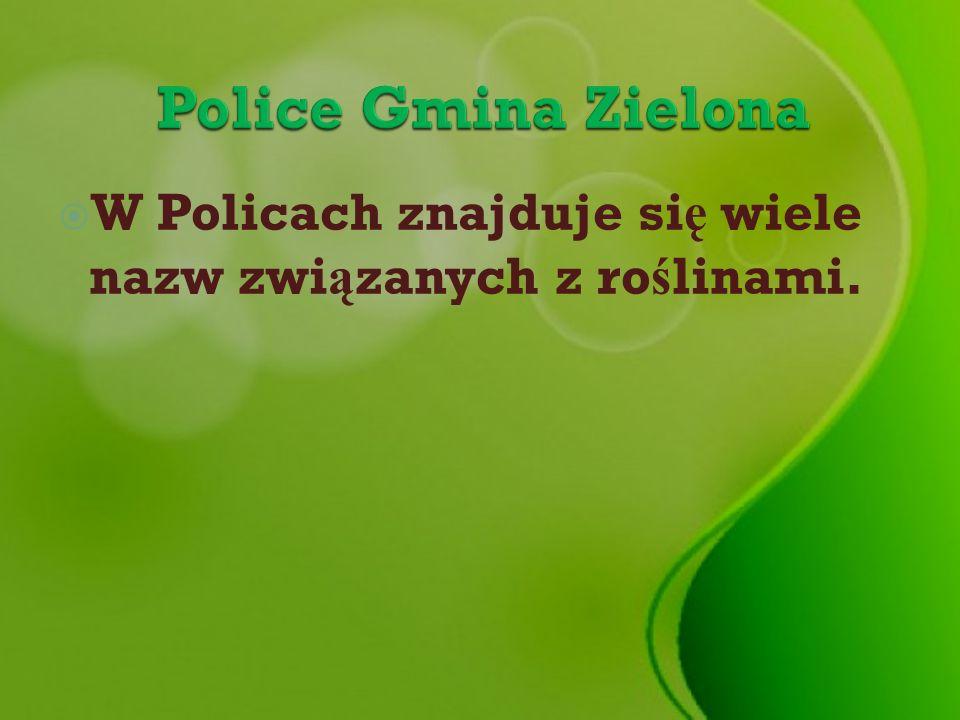 Police Gmina Zielona W Policach znajduje się wiele nazw związanych z roślinami.