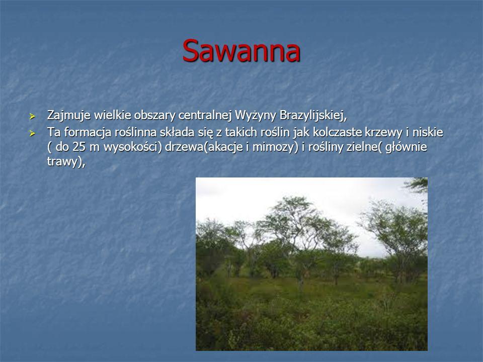 Sawanna Zajmuje wielkie obszary centralnej Wyżyny Brazylijskiej,