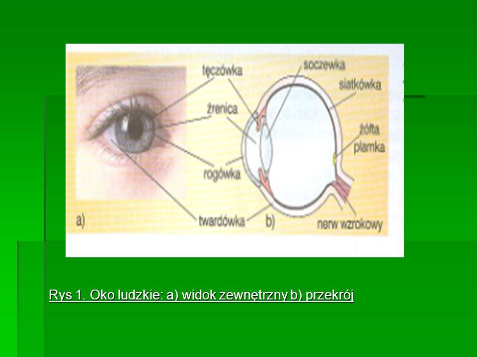 Rys 1. Oko ludzkie: a) widok zewnętrzny b) przekrój