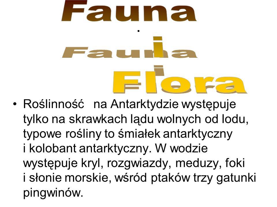 Fauna i. Flora. .