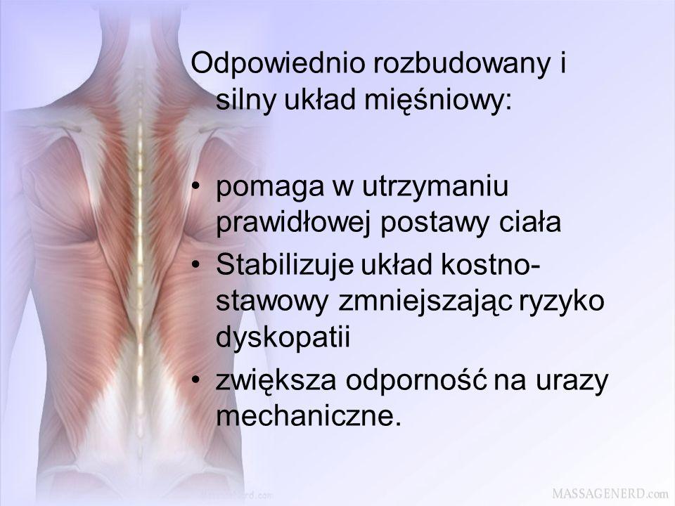 Odpowiednio rozbudowany i silny układ mięśniowy: