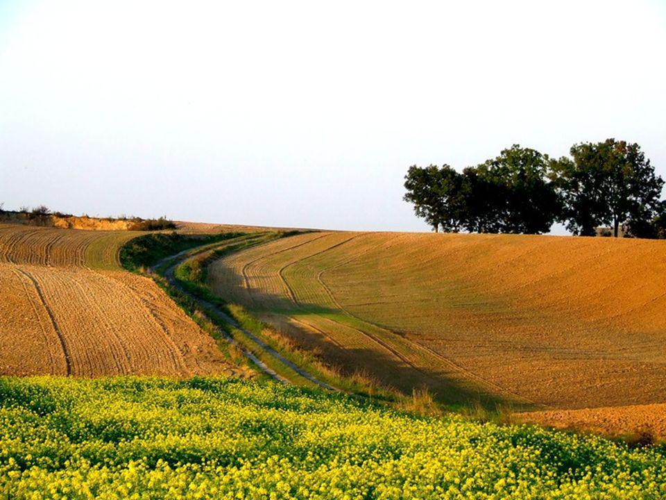 Pole to ziemia uprawna, na której rolnik sieje rośliny np