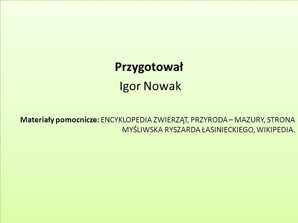 Przygotował Igor Nowak