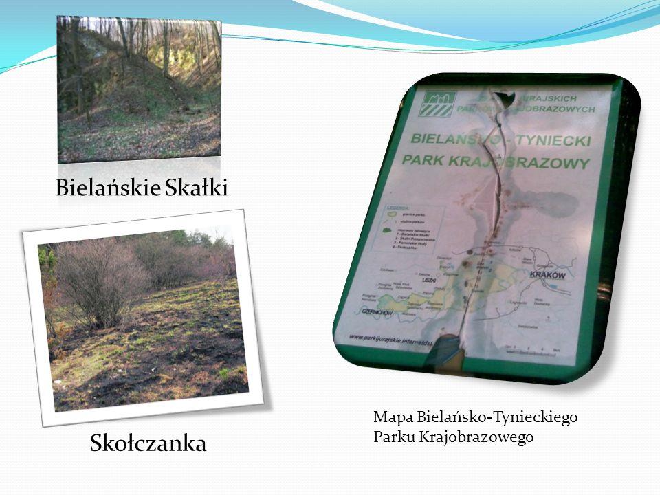 Bielańskie Skałki Skołczanka Mapa Bielańsko-Tynieckiego