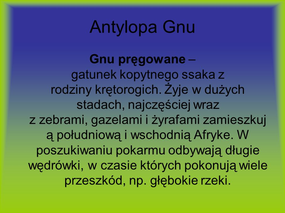 Antylopa Gnu