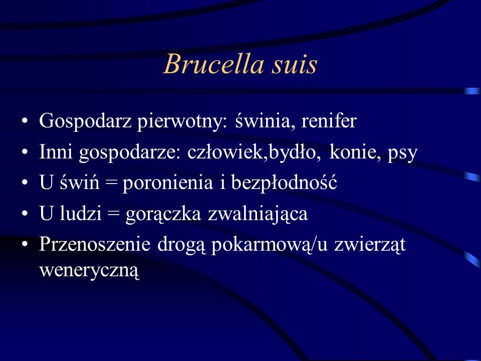 Brucella suis Gospodarz pierwotny: świnia, renifer