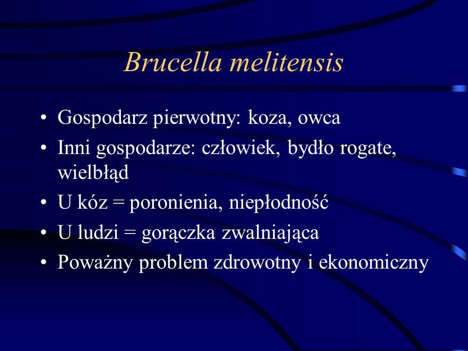 Brucella melitensis Gospodarz pierwotny: koza, owca