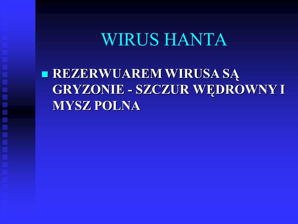 WIRUS HANTA REZERWUAREM WIRUSA SĄ GRYZONIE - SZCZUR WĘDROWNY I MYSZ POLNA