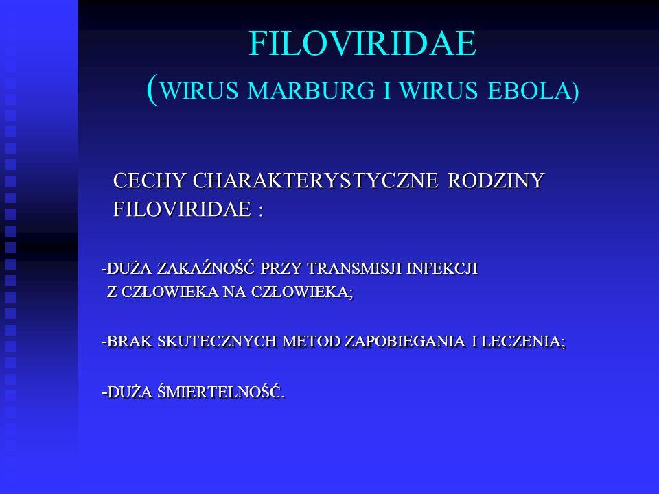FILOVIRIDAE (WIRUS MARBURG I WIRUS EBOLA)