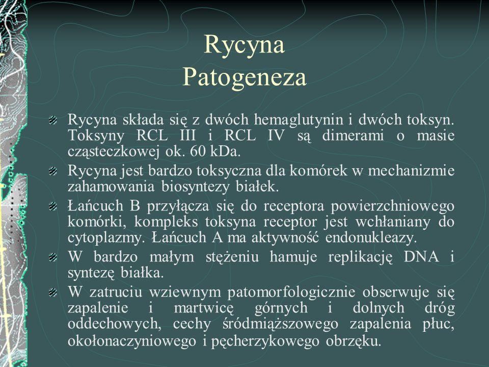 Rycyna Patogeneza Rycyna składa się z dwóch hemaglutynin i dwóch toksyn. Toksyny RCL III i RCL IV są dimerami o masie cząsteczkowej ok. 60 kDa.