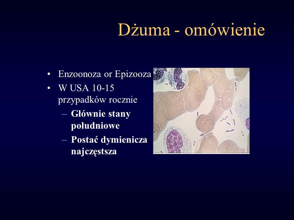 Dżuma - omówienie Enzoonoza or Epizooza W USA 10-15 przypadków rocznie