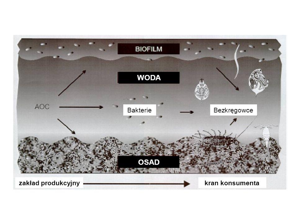zakład produkcyjny kran konsumenta OSAD WODA Bakterie Bezkręgowce
