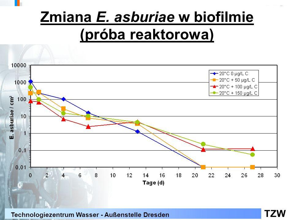 Zmiana E. asburiae w biofilmie