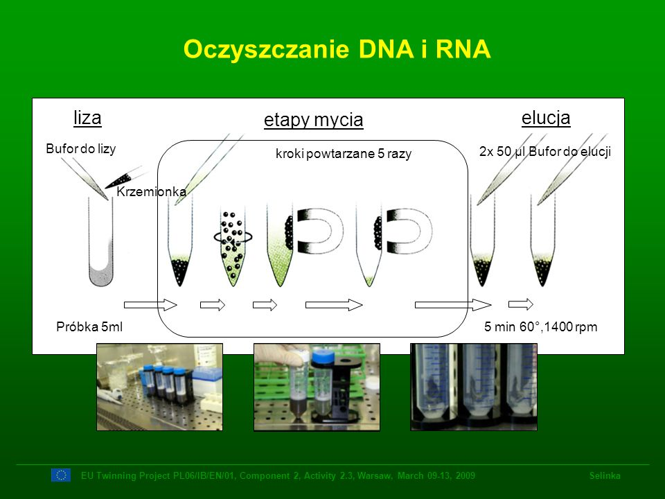 Oczyszczanie DNA i RNA liza etapy mycia elucja Bufor do lizy