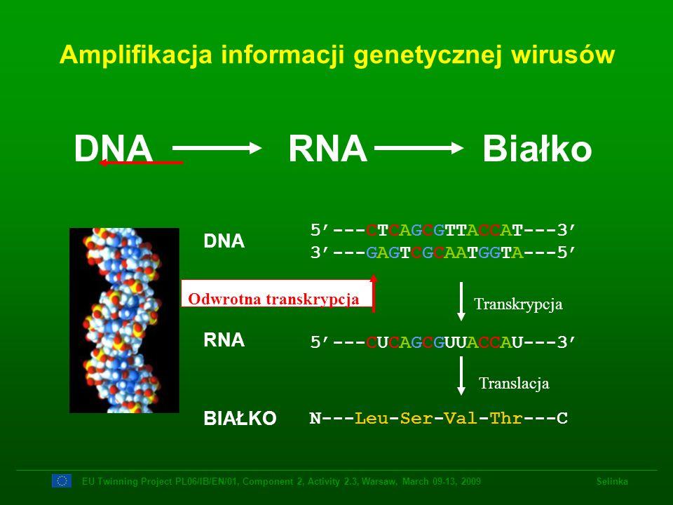 Amplifikacja informacji genetycznej wirusów