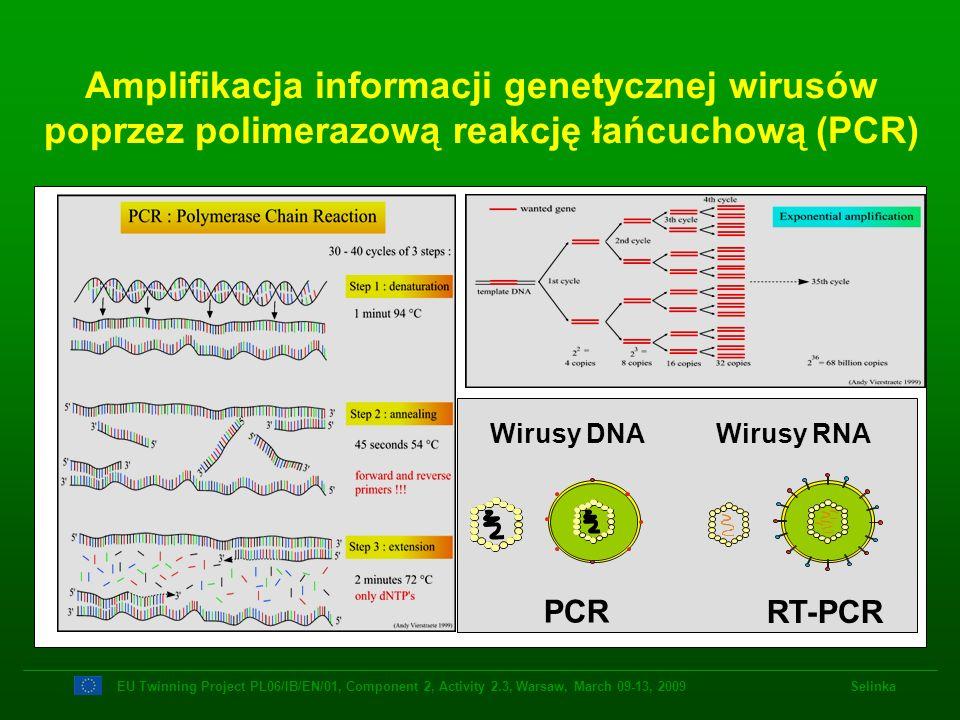 Amplifikacja informacji genetycznej wirusów poprzez polimerazową reakcję łańcuchową (PCR)