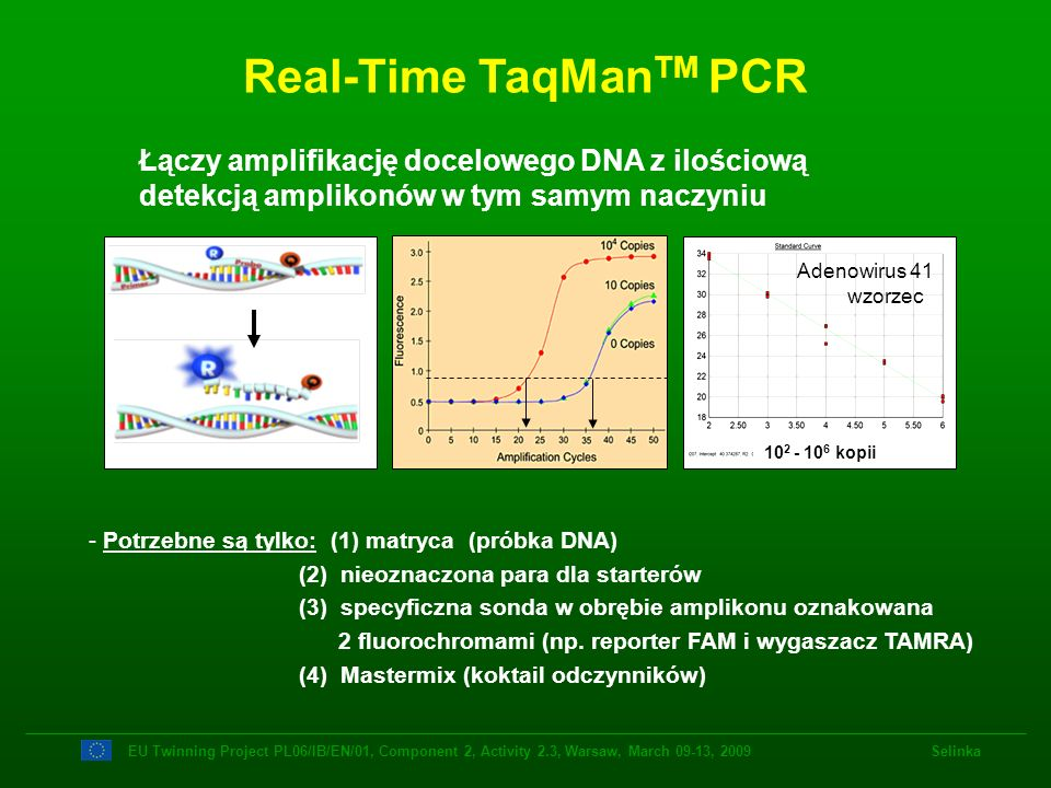 Real-Time TaqManTM PCR