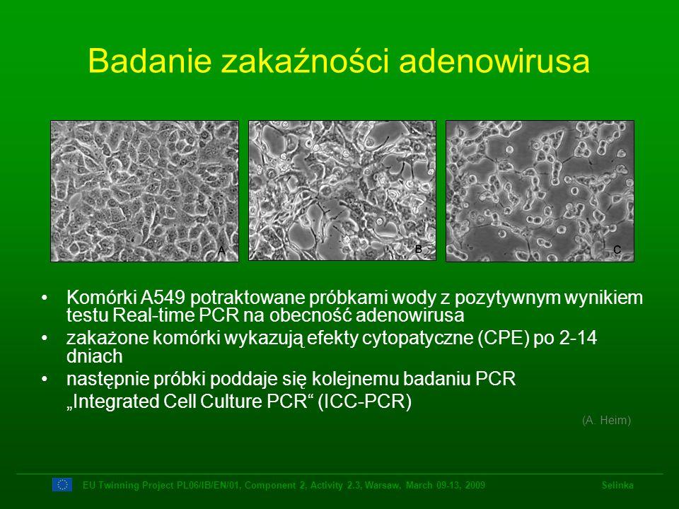 Badanie zakaźności adenowirusa