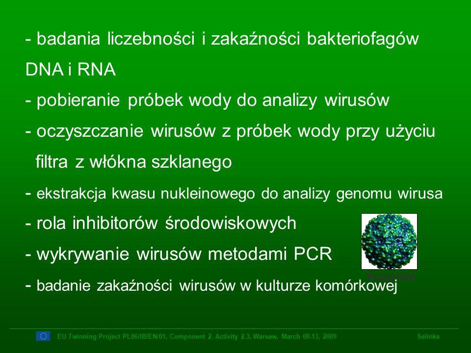 badania liczebności i zakaźności bakteriofagów DNA i RNA