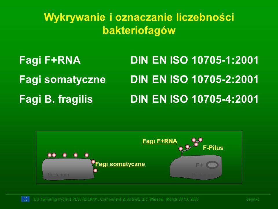 Wykrywanie i oznaczanie liczebności bakteriofagów