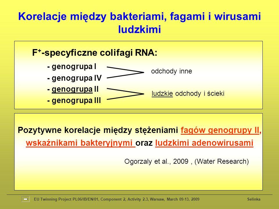Korelacje między bakteriami, fagami i wirusami ludzkimi