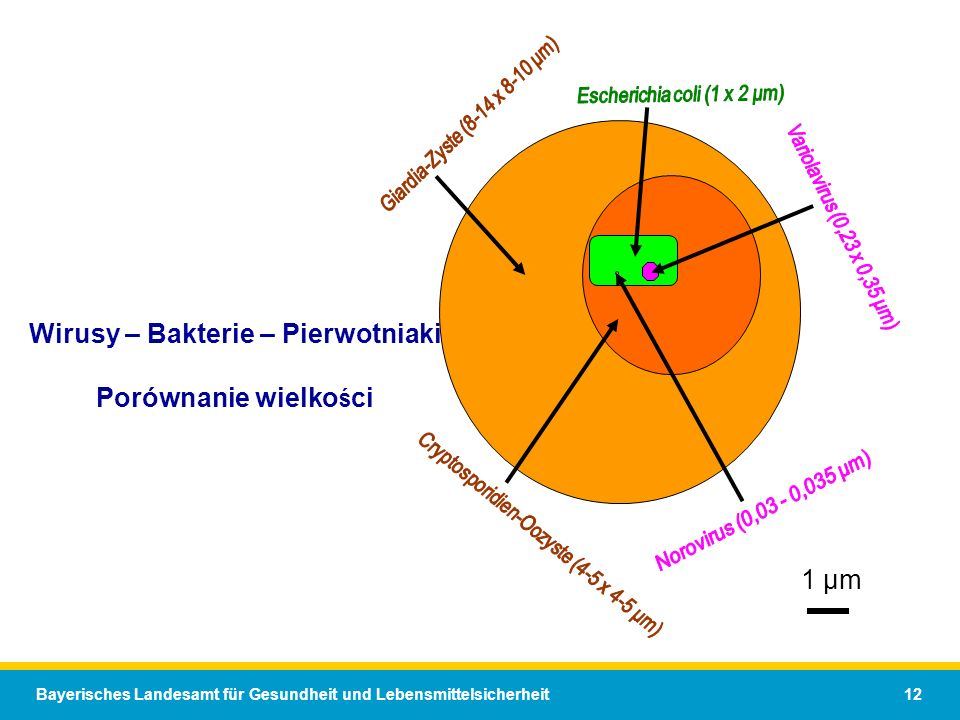 Wirusy – Bakterie – Pierwotniaki